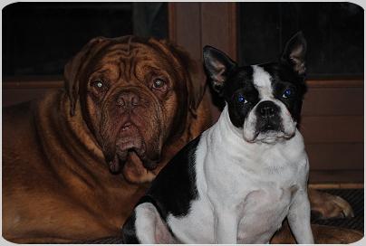 Willi und Trulla
